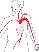 angina pectoris pain