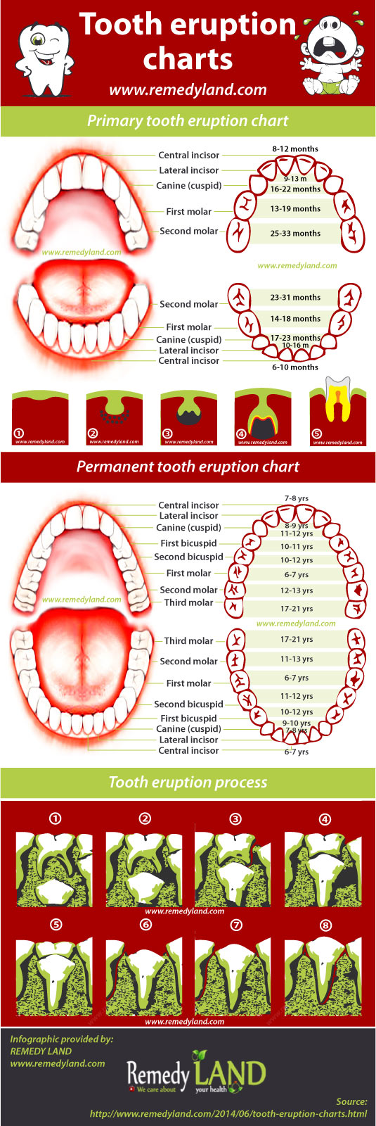 tooth charts